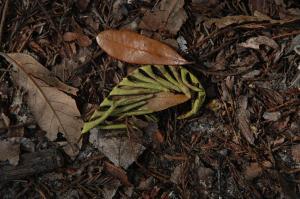 leaf litter resized