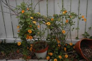 garden thug blog