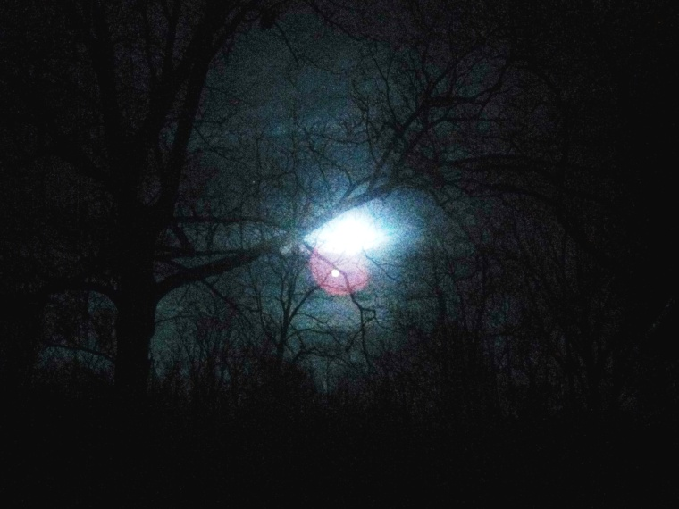 Fuzzy full moon through the walnut tree