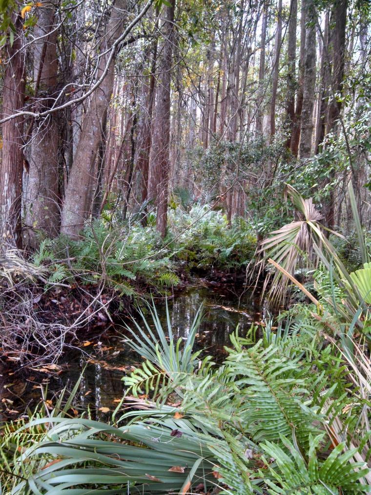 Creek and bracken forest