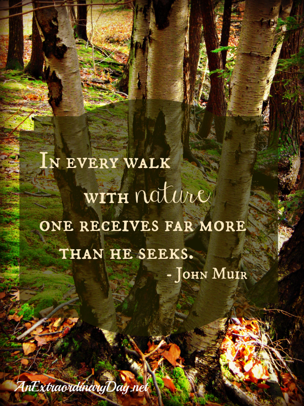 John Muir Quote from AnExtradordinaryday.net