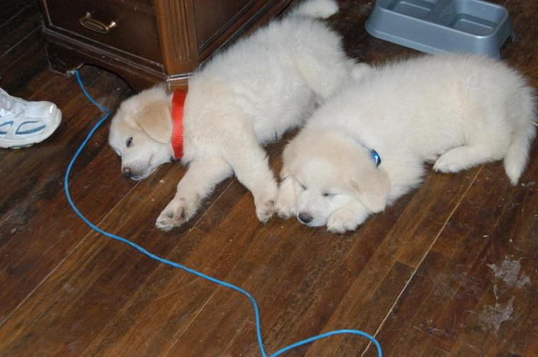 Bonnie & Clyde - first day 6.22.08