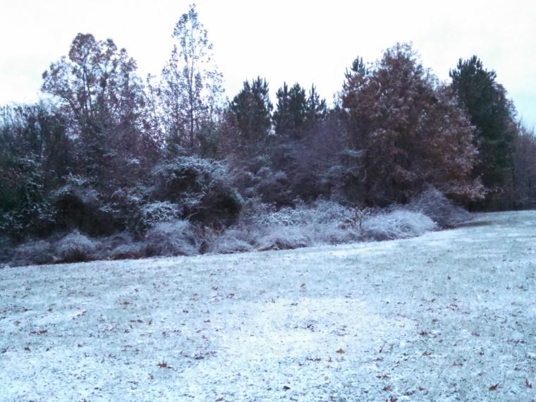 Snow kissed brambles