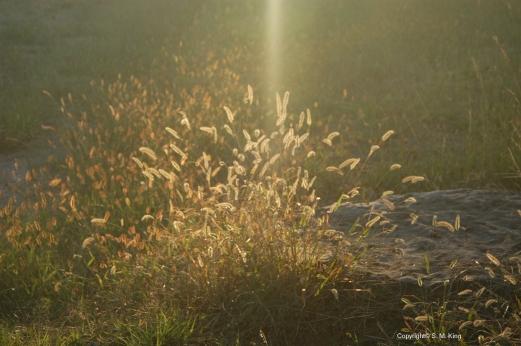 Shining Splendor
