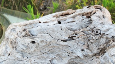 Driftwood aging