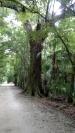 Oak history